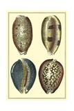 Classic Shells IV