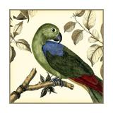 Tropical Parrot III