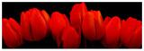 Crimson Tulips