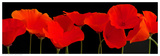 Vermilion Poppies