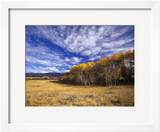 Autumn Aspens and Old Barn  Big Snowy Mountains  Judith Gap  Montana  USA