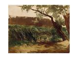 Bullrush (Piedra)  Ca 1872