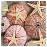 Starfish & Sea Urchins Reproduction d'art par Bramwell