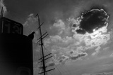 A Silhouetted Pigeon  Columbidae Species  Perched Atop a Structure Near a Ship's Mast