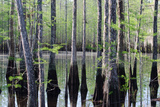 Cypress Trees Surround a Pond on a Ranch