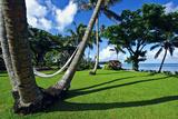 Hammocks Hang Lazily Between Garden Palm Trees Overlooking the Sea