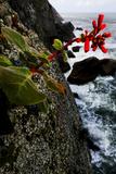 Red Flowers on Granite Cliffs Above the Atlantic Ocean in Serra Da Tiririca State Park