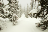 A Ski Trail Through a Snow-Blanketed Evergreen Forest