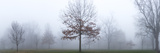 A Landscape with Trees in a Heavy Fog