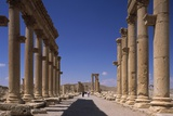 Great Colonnade in the Roman Ruins of Palmyra  Syria