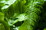 Raindrops Pour from Fern Frond Leaves During a Tropical Downpour