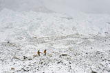 Sherpas Return to Base Camp from Mount Everest in Nepal