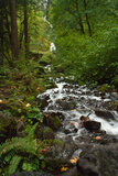 Stream Near Multnomah Falls in Oregon's Columbia River Gorge