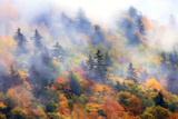 Fog over a Forested Hillside in New England Fall Colors