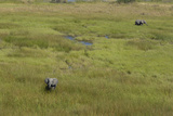 Aerial of Two African Elephants in a Vast Sea of Lush Green Grass and Small Water Channels