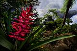 A Flowering Bromeliad and Rainforest Waterfalls in Iguazu National Park