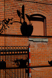 A Plant and Teapot Silhouetted Against an Old Red Brick Building in Westport  Kansas City
