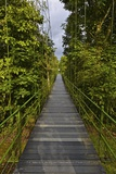 A Boardwalk Leads Through the Rain Forest at Costa Rica's La Selva Biological Station