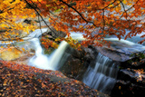 Water Rushing Past Trees Bearing Brilliant Autumn Colors