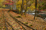 Autumn Leaves Cover Railroad Tracks at the Dupont Powder Mill
