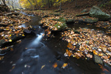 Autumn Leaves Float in a Creek at Woodlawn  a Tract of Upland Meadows and Woods