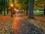 A Brightly Lit  Leaf-Littered Path Through a Grove of Trees in Autumn