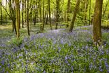 Glenariff Forest Park in County Antrim