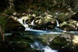 Golitha Falls I