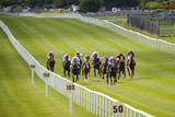 Horse Racing at the Curragh in Ireland