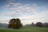 A Lone Sycamore Tree Emerges from the Mist at Woodlawn's Upland Meadows and Woods