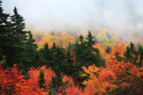 A Forest in Brilliant Autumn Hues Colors the Landscape Beneath a Thick Fog