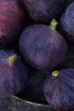 Purple Figs Ii