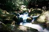 Golitha Falls Ii