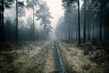 Forest Dawn