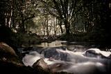 Golitha Falls Iii