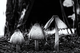 The Mushrooms