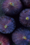 Purple Figs Iii