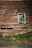 Rustic Red Barn Wall with Tree Brand Shadows in the Window