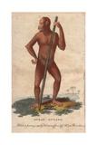 Ouran Outang or Bornean Orangutan Pongo Pygmaeus