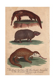 Great Anteater  Three-Banded Armadillo and Short-Tailed