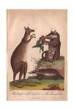Kangaroo  Badger and Opossum Macropus Giganteus  Meles Meles  Didelphis Virginiana