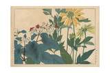 Coneflower  Rudbeckia Hirta  and Bleeding Glory-Bower  Clerodendrum Thomsoniae