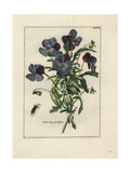 Violet with Beetle