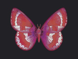 Summer Butterfly II