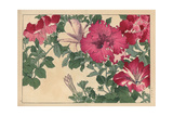 Petunia Varieties