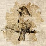 Bird Study IV