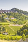 The Vineyards of Sancerre in the Loire Valley  Cher  Centre  France  Europe