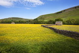 Field Barns and Buttercup Meadows at Muker