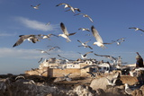 View to the Ramparts and Medina with Seagulls