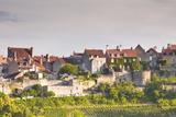 Le Clos Vineyard Below the Hilltop Village of Vezelay in Burgundy  France  Europe
